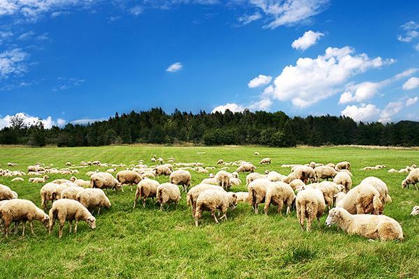 Farming-Land-Conveyancing